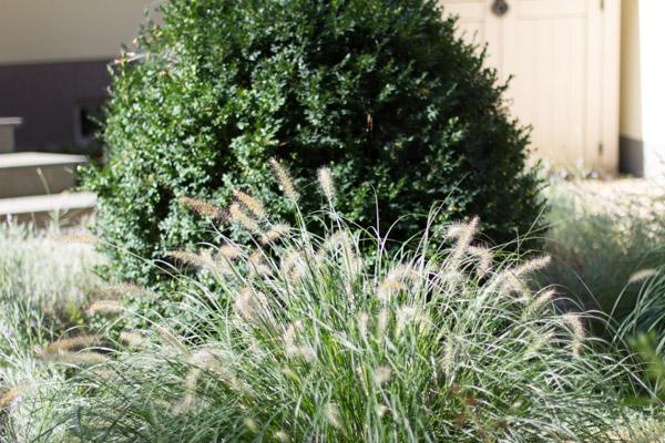 Gartengestaltung anleitung pflanzplan kosten - Pflanzplan vorgarten ...