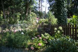 Rispenhortensie und Ballhortensie als Begrenzung zum Nachbarn