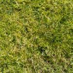Ein schöner Rasen entsteht nur durch gute Bewässerung beispielsweise durch einen Gartenbrunnen.