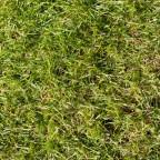 Angewachsener dichter Rasen