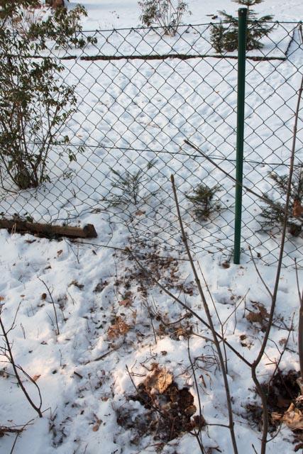Ein Maschendrahtzaun ohne Granitkante oder Fundament ist kein Hindernis für Wildschweine